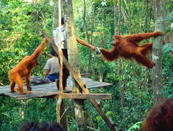 The Bukit Lawang tour